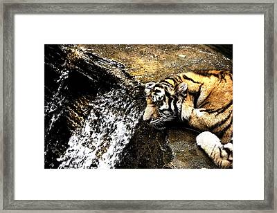 Tiger Falls Framed Print by Angela Rath