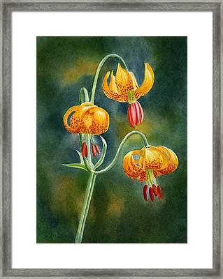 Tiger Lilies #3 Framed Print by Sharon Freeman