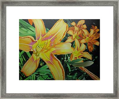 Tiger Lillies In Bloom Framed Print by Jeff Taylor
