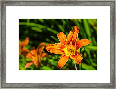 Tiger Lily 02 Framed Print by Ken Beatty