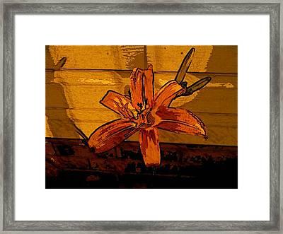 Tiger Lily Framed Print by Tanya Moody