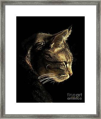 Tiger Within Framed Print by Dale   Ford