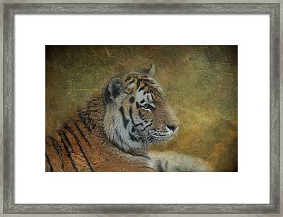 Tigerlily Framed Print by Claudia Moeckel