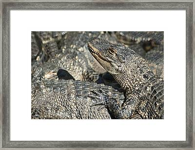 Time For A Manicure Framed Print by Carolyn Marshall