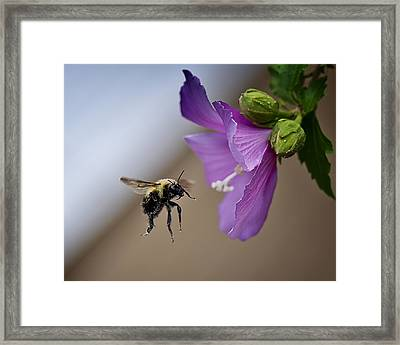 Time To Make The Donuts Framed Print by Michael Putnam