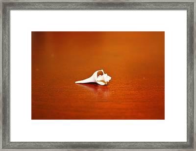 Tiny Shell Framed Print by Tanya Moody