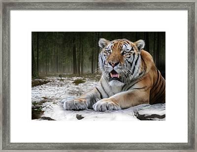 TJ  Framed Print by Big Cat Rescue