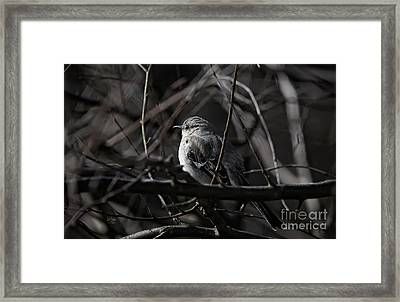To Kill A Mockingbird Framed Print by Lois Bryan