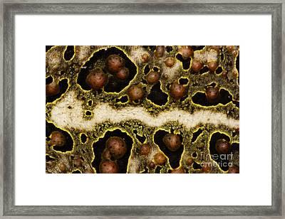 Toadally Up Close Framed Print by Lynda Dawson-Youngclaus