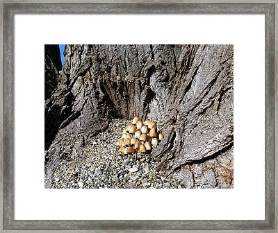 Toadstools In The Gravel Framed Print by Will Borden
