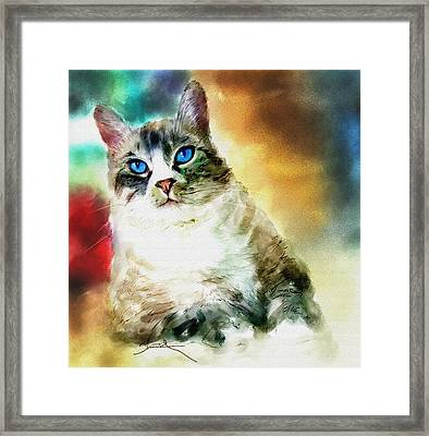 Toby The Cat Framed Print by Robert Smith