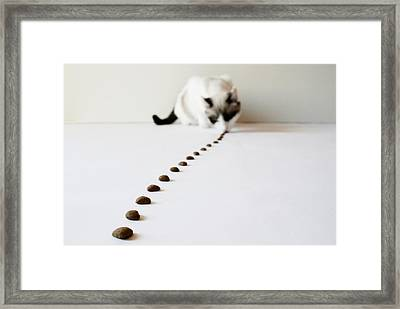Tom Thumb Framed Print by © Nico Piotto