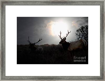Tomales Bay California Tule Elks At Sunrise . 7d4402 Framed Print by Wingsdomain Art and Photography