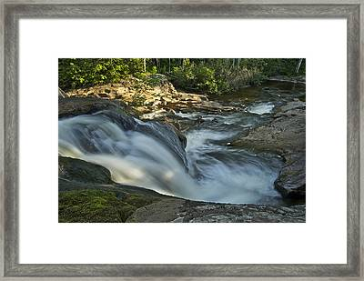 Top Of The Dog 4191 Framed Print by Michael Peychich