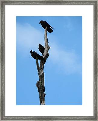 Top Of The Morning To You Framed Print by Gothicolors Donna Snyder