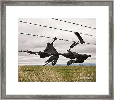 Torn Bags On A Barbed Wire Fence Framed Print by Paul Edmondson