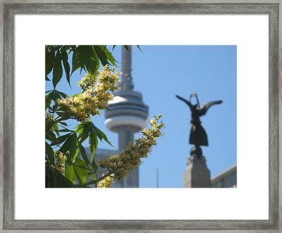 Toronto Spring Framed Print by Alfred Ng