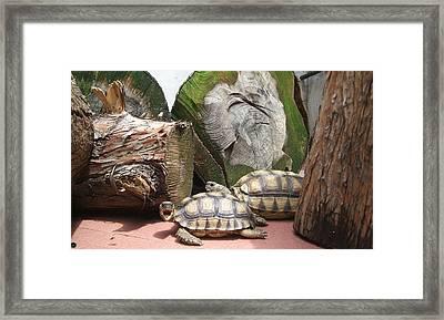 Tortoise Yawn Framed Print by Arte Ivanna