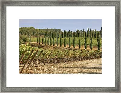 Toscana Framed Print by Joana Kruse
