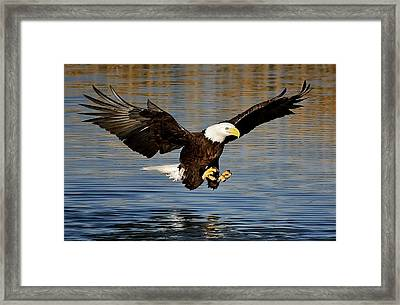 Touch Down Framed Print by Paulette Thomas
