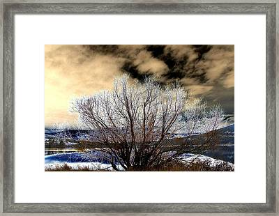 Touch Of Frost Framed Print by Will Borden