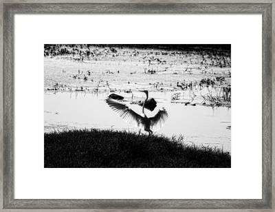 Touchdown-black And White Framed Print by Douglas Barnard