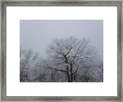 Towering Winter Landscape Framed Print by Brian  Maloney