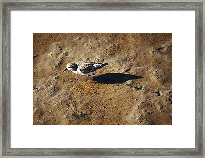 Tracks In The Mud Framed Print by Roena King