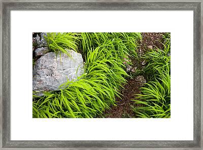 Trail Framed Print by Konstantin Dikovsky
