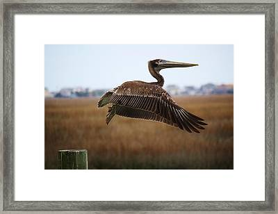 Traveling Framed Print by Paulette Thomas