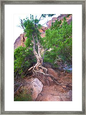 Tree Along The Trail Framed Print by Bob and Nancy Kendrick