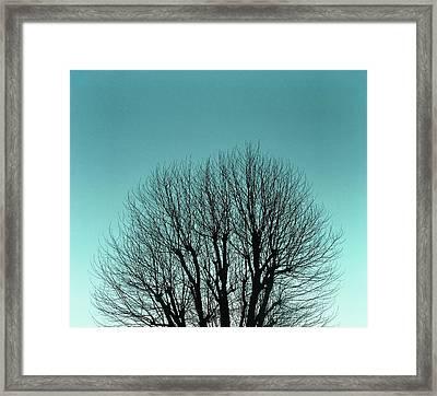 Tree And Sky Framed Print by Richard Newstead