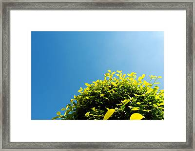 Tree And The Sky Framed Print by Sumit Mehndiratta