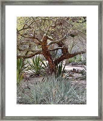 Tree And Yucca Framed Print by Rebecca Margraf
