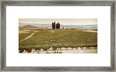 Tree Circle - Tuscany  Framed Print by Trevor Neal