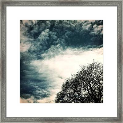 Tree Crown Framed Print by Joana Kruse