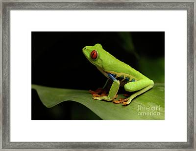 Tree Frog 14 Framed Print by Bob Christopher