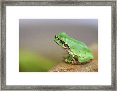 Tree Frog Framed Print by Copyright Crezalyn Nerona Uratsuji