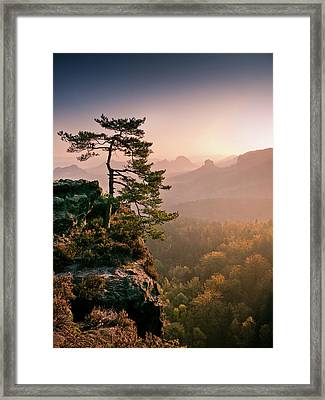 Tree In Morning Llght In Saxon Switzerland Framed Print by Andreas Wonisch
