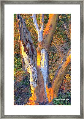 Tree In The Sunset Framed Print by Randall Thomas Stone