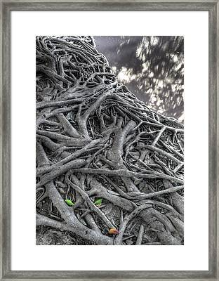 Tree Roots Framed Print by Natthawut Punyosaeng