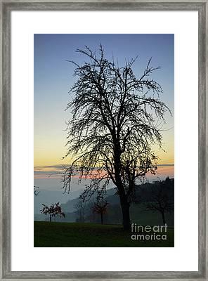 Tree Silhouette At Sunset 2 Framed Print by Bruno Santoro