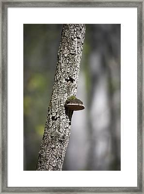 Tree Step Framed Print by Teresa Mucha