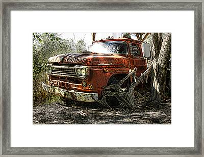 Tree Truck Framed Print by Peter Chilelli