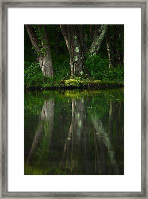 Tree Trunks Framed Print by Karol Livote