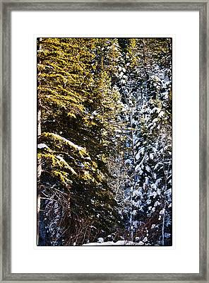 Trees In Taos Village Framed Print by Lisa  Spencer