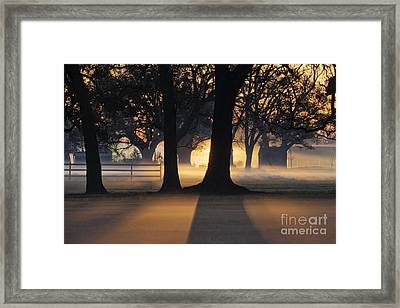 Trees In The Morning Mist Framed Print by Jeremy Woodhouse