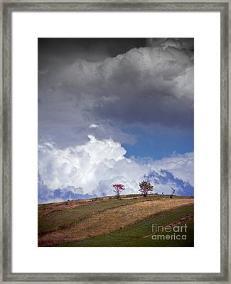 Trees Framed Print by James Taylor