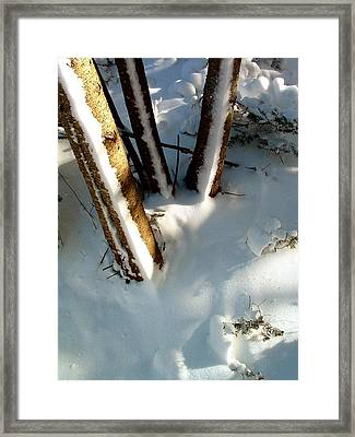 Trees Trio In Architectural Order Framed Print by William OBrien