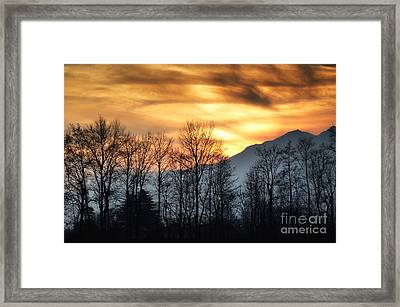 Trees With Orange Sky Framed Print by Mats Silvan